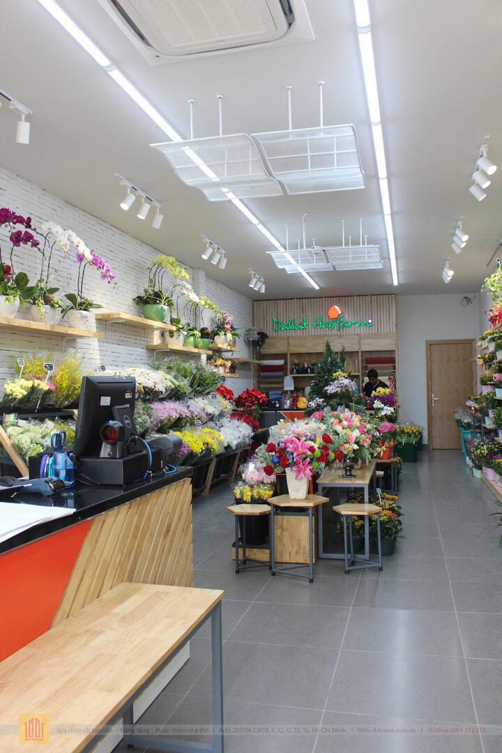 Drhome cai tao showroom hoa Dalat Hasfarm 620 PVT Go Vap 3