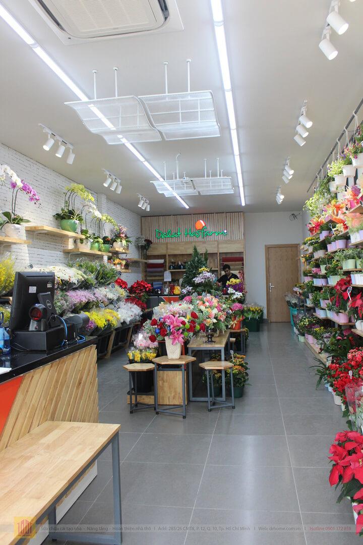 Drhome cai tao showroom hoa Dalat Hasfarm 620 PVT Go Vap 4