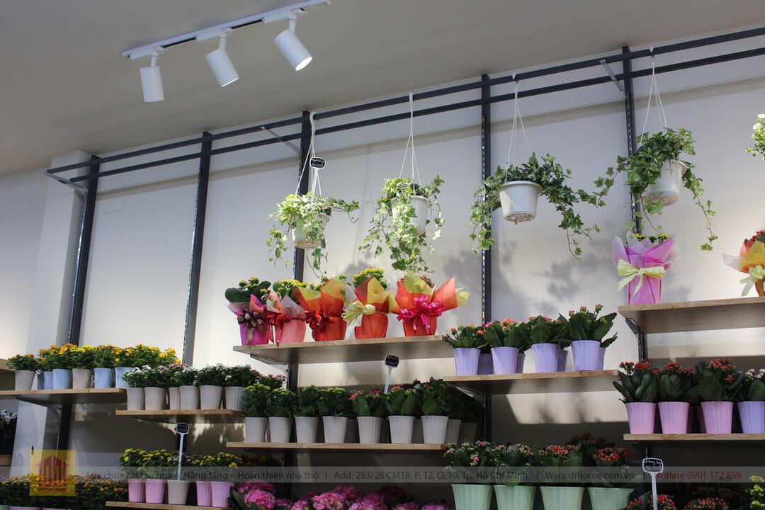 Drhome cai tao shop hoa Dalat Hasfarm 620 PVT Go Vap 6