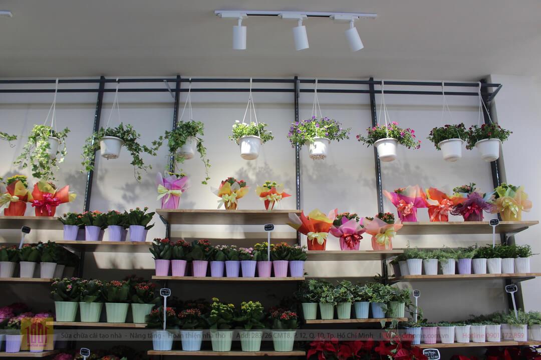 Drhome cai tao shop hoa Dalat Hasfarm 620 PVT Go Vap 7