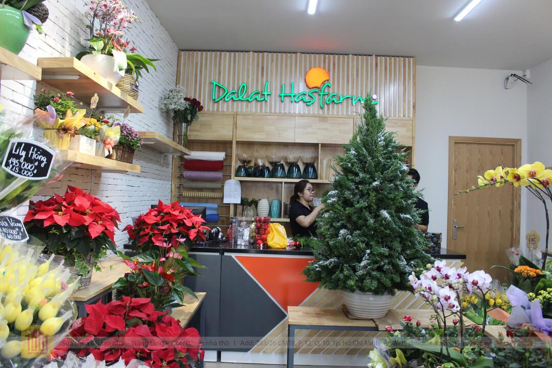 Drhome cai tao showroom hoa Dalat Hasfarm 620 PVT Go Vap 8