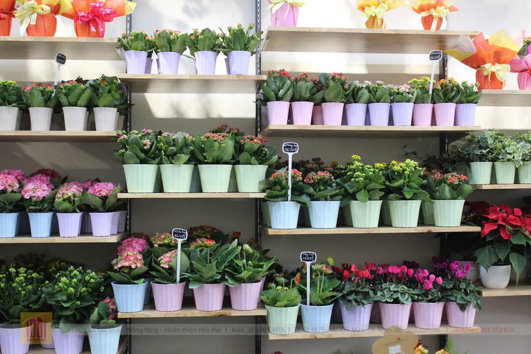 Drhome cai tao showroom hoa Dalat Hasfarm 620 PVT Go Vap 9