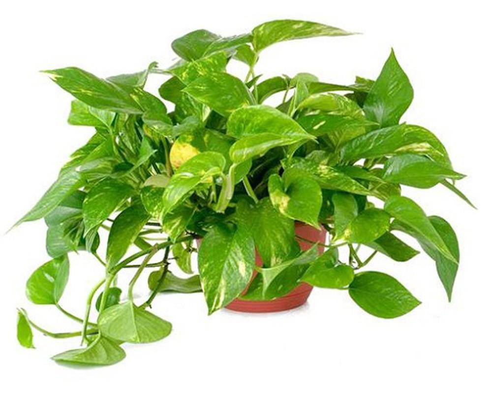 Sử dụng cây xanh để lọc sạch bụi bẩn trong ngôi nhà