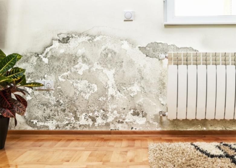 Tránh ẩm mốc cho ngôi nhà để phòng bệnh