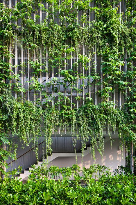 Trồng nhiều cây xanh giúp giảm nhiệt độ phòng