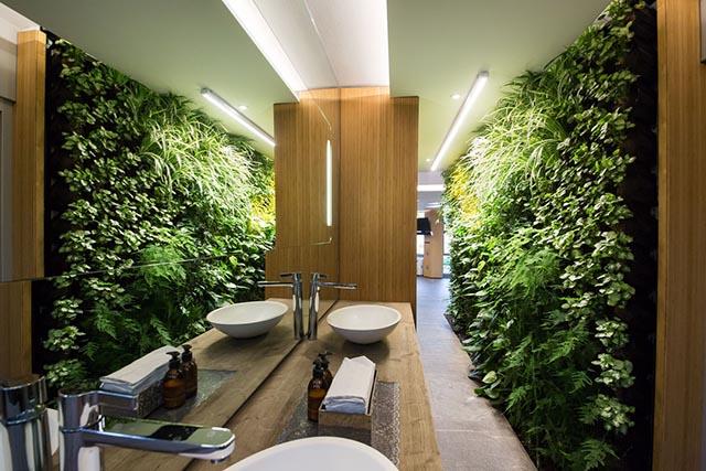 Trang trí tường bằng cây xanh