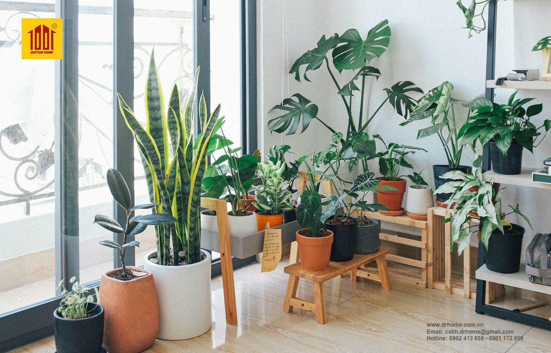 Danh sách những cây trồng trong nhà tốt nhất cho bạn